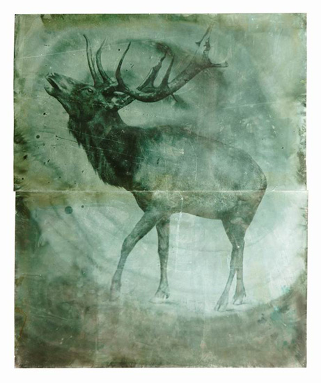 Hirsch (Deer), 2008, b/w photograph on Baryt paper, coloured, 216 x 180 cm