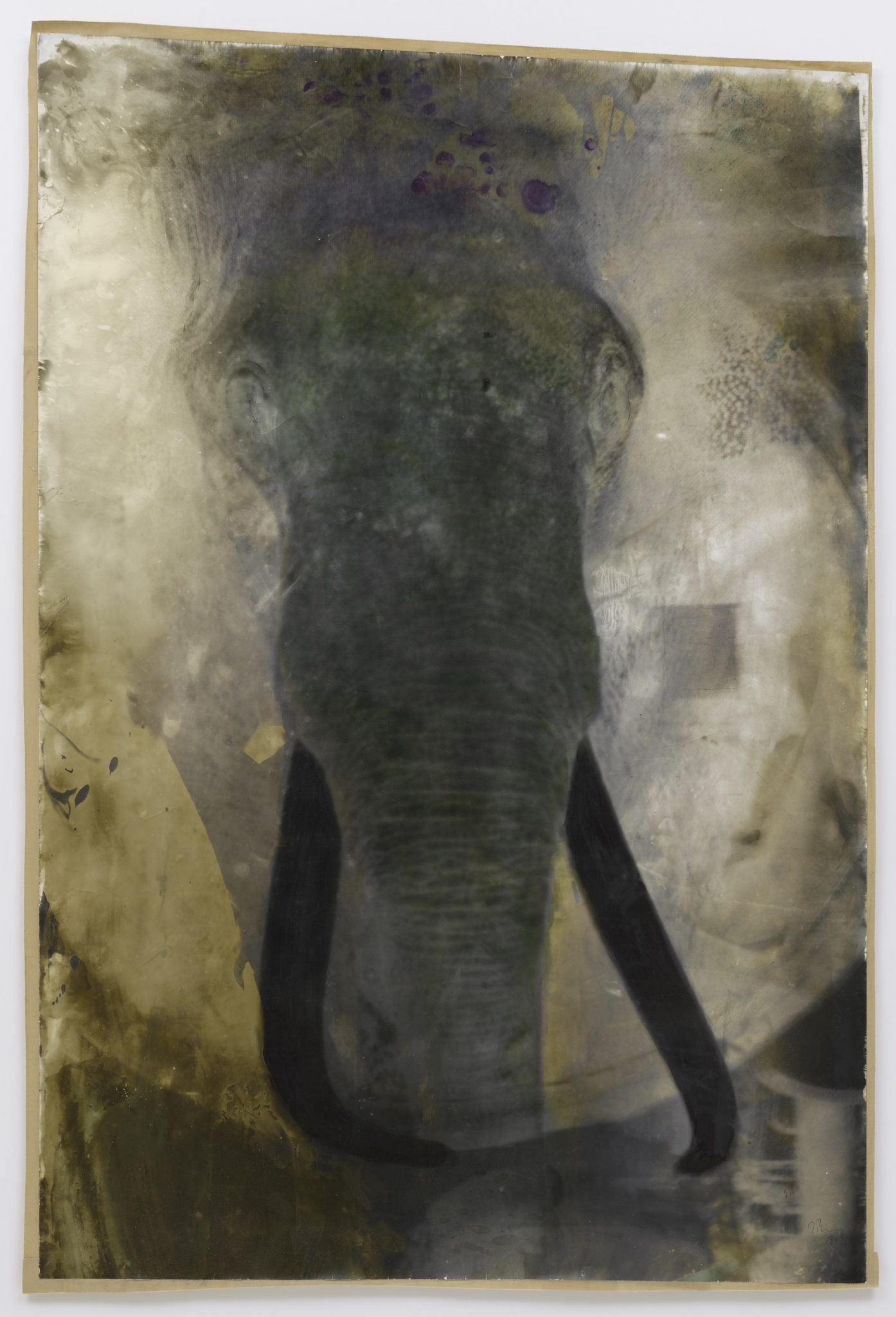 Elephant, 2018, b/w photograph on Baryt paper, coloured, 170 x 126 cm